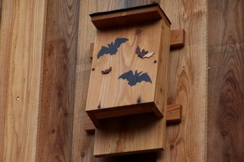 bat-box2