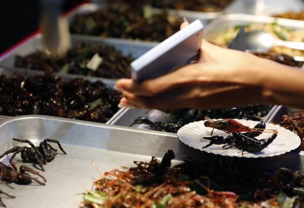 cucinare-insetti