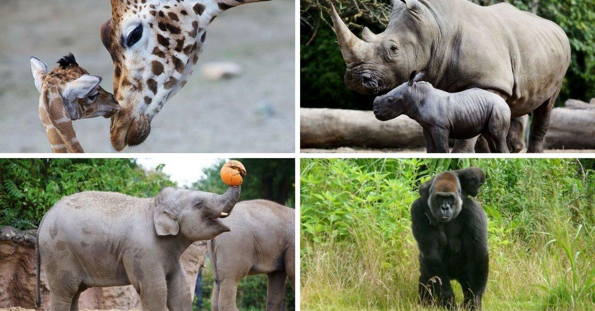 Zoo di Dublino: morti oltre 100 animali in solo 2 anni