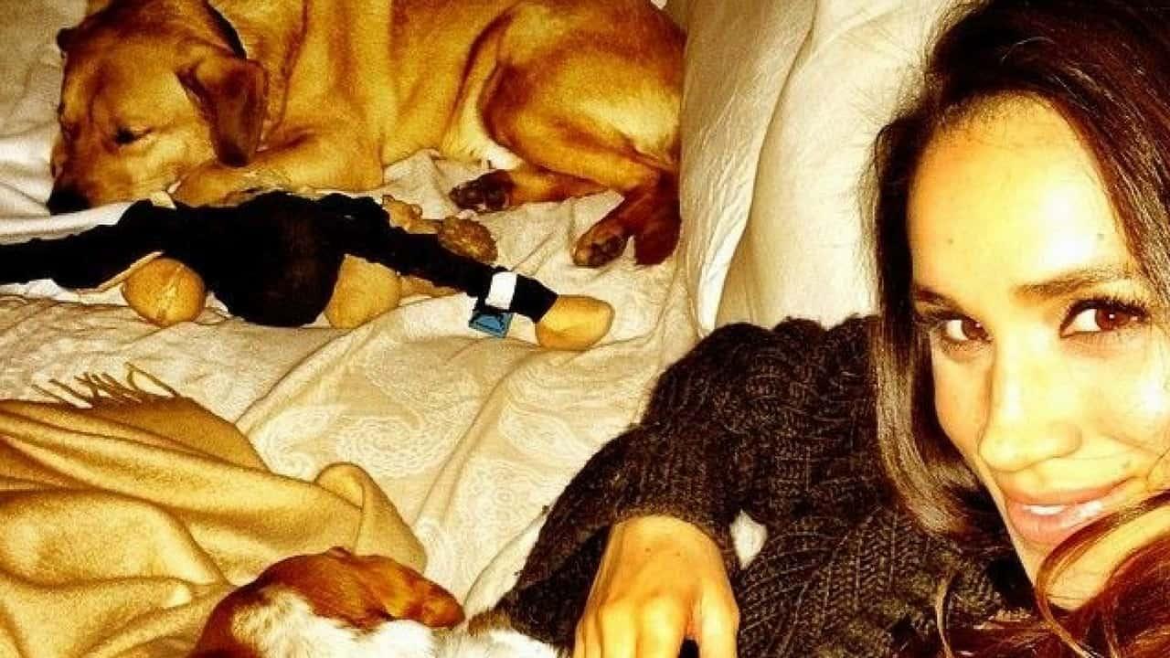 """Meghan Markle, addio al suo cane: """"troppo vecchio per volare"""""""