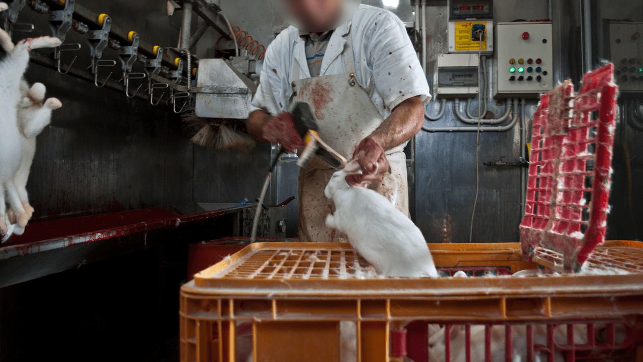 macello conigli animal equality