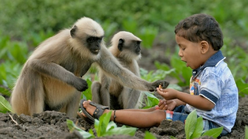 Samarth Bangari, il bambino che gioca con le scimmie