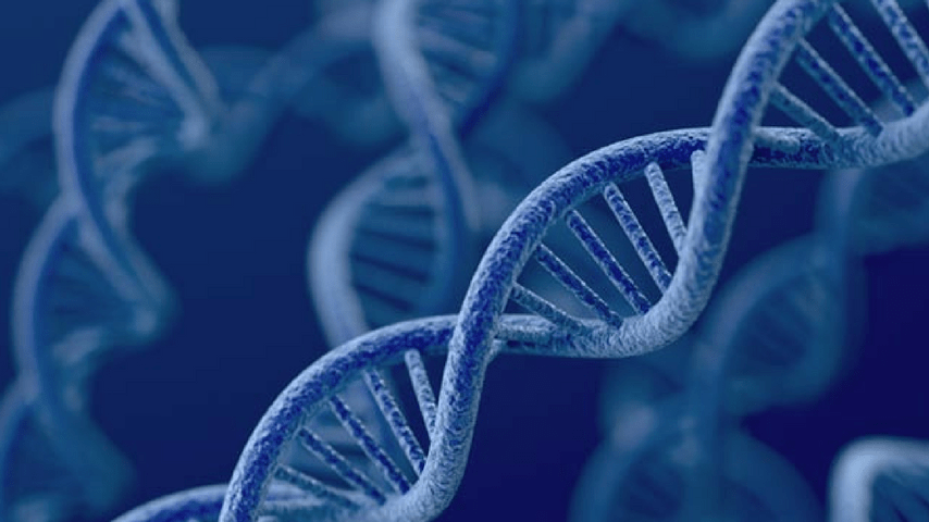Molecola di DNA