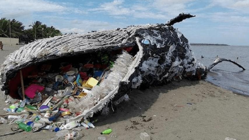 balena greenpeace