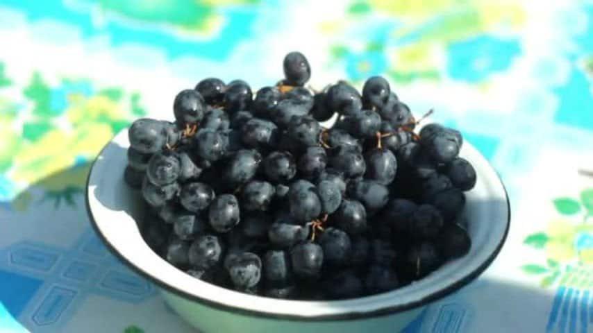 Ingoia un chicco d'uva e soffoca a 3 anni