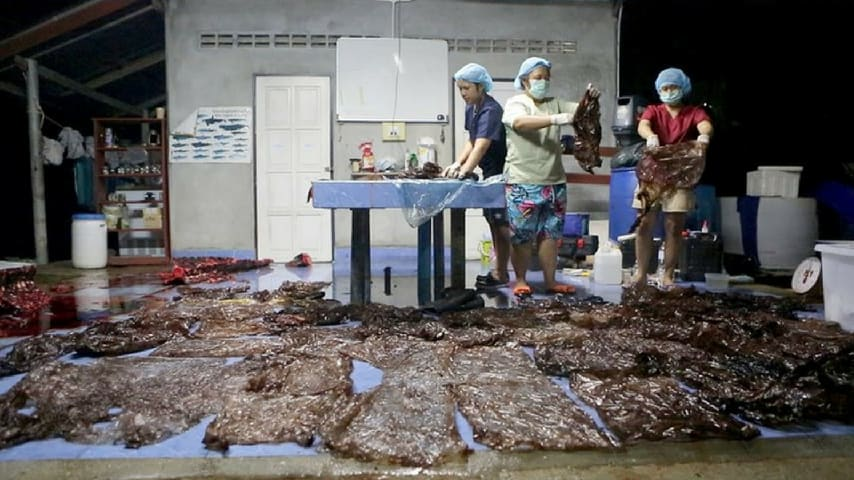 Le 80 buste di plastica rinvenute all'interno dello stomaco della balena