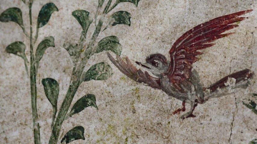 Un uccellino della casa del giardino incantato
