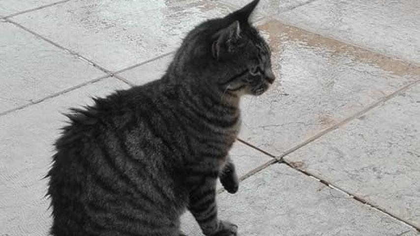 Una delle tante immagini della gatta Tenny