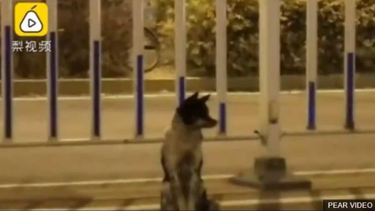 cane aspetta padrona morta per tre mesi