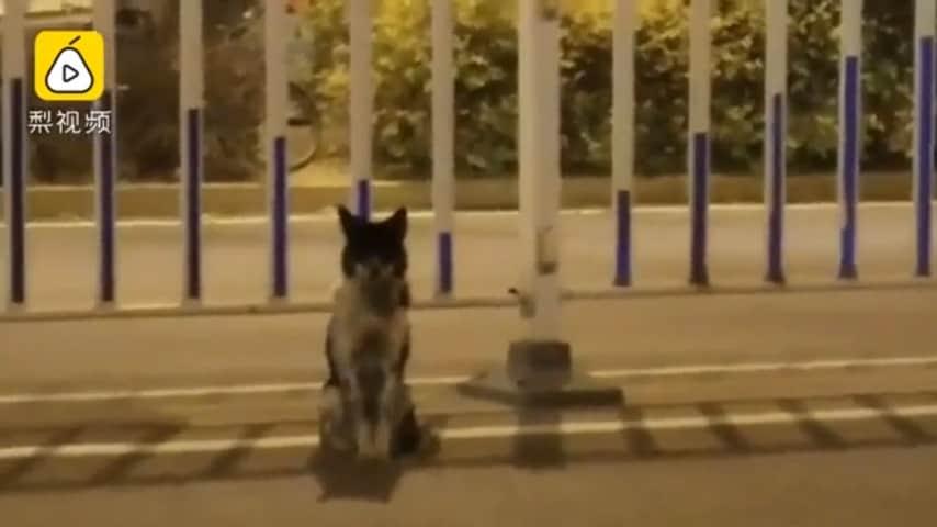 cane aspetta padrona morta per 3 mesi