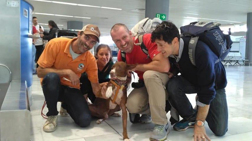Associazione Podencos for life rescue