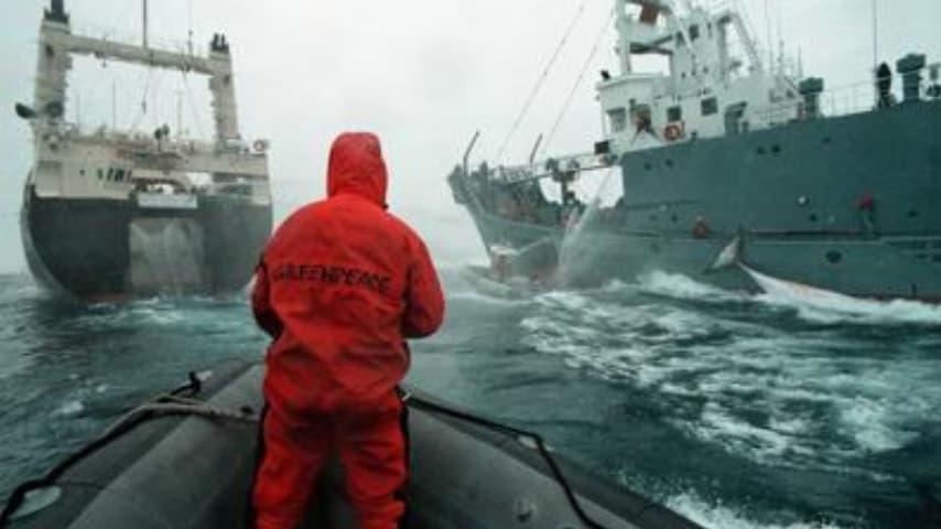 In questi anni molte organizzazioni hanno combattuto la caccia alle balene condotta da paesi come il Giappone. Immagine: Adnkronos