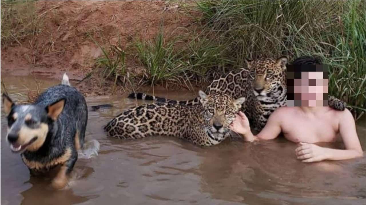 Tiago con i giaguari