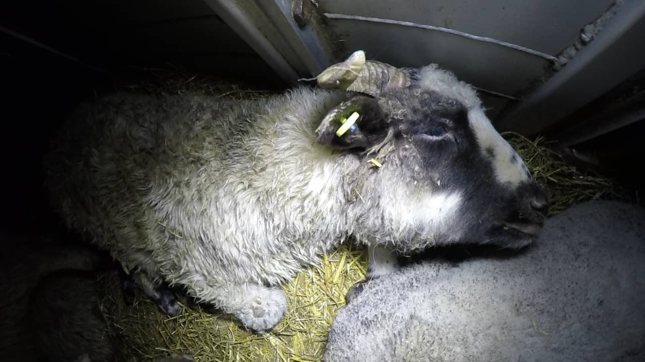 agnelli animal equality