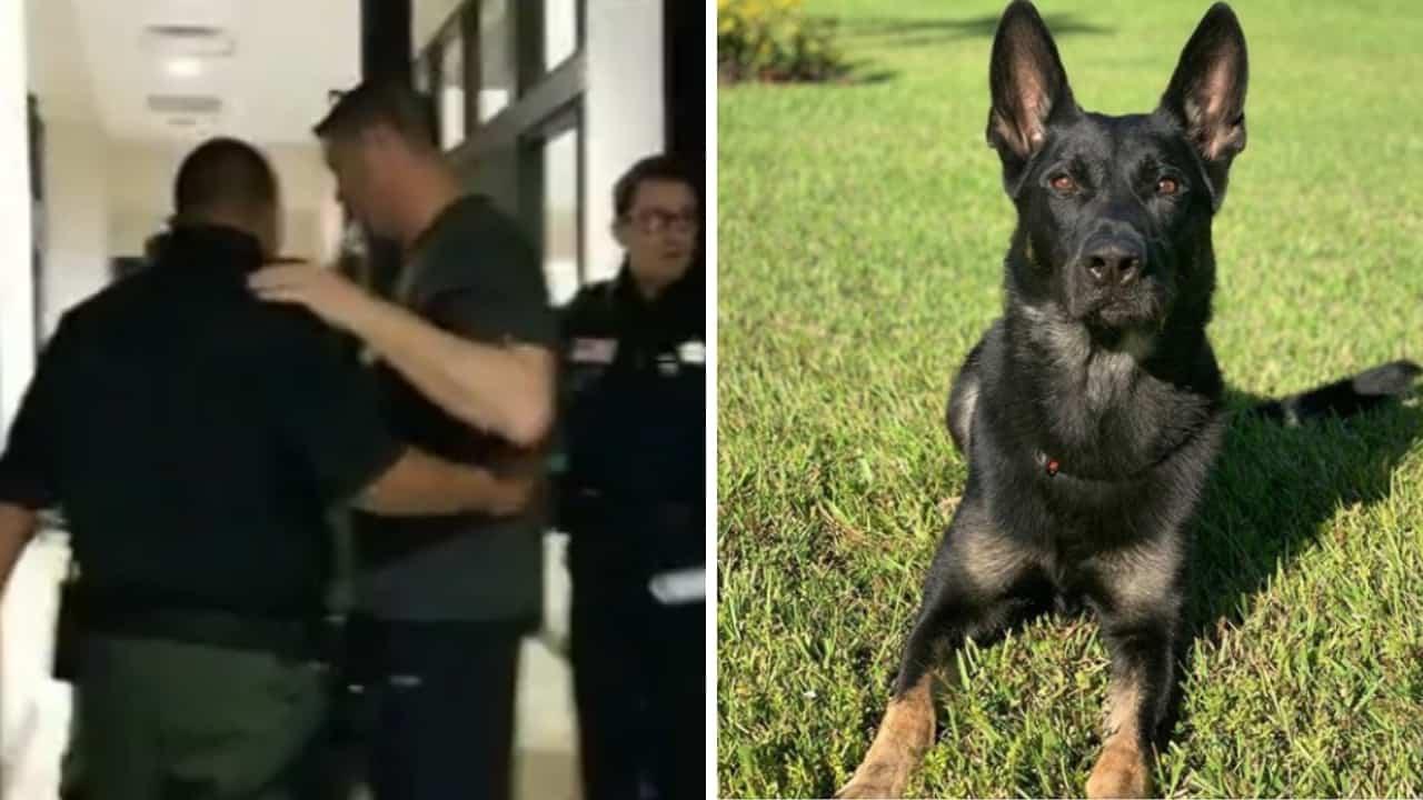 cane poliziotto morto
