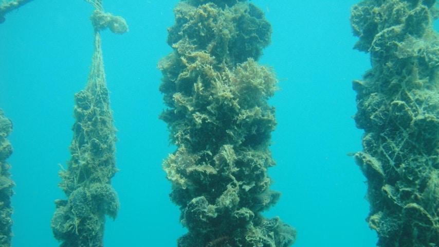 Le cozze allevate in mare sono quelle che presentano il rischio di contaminazione