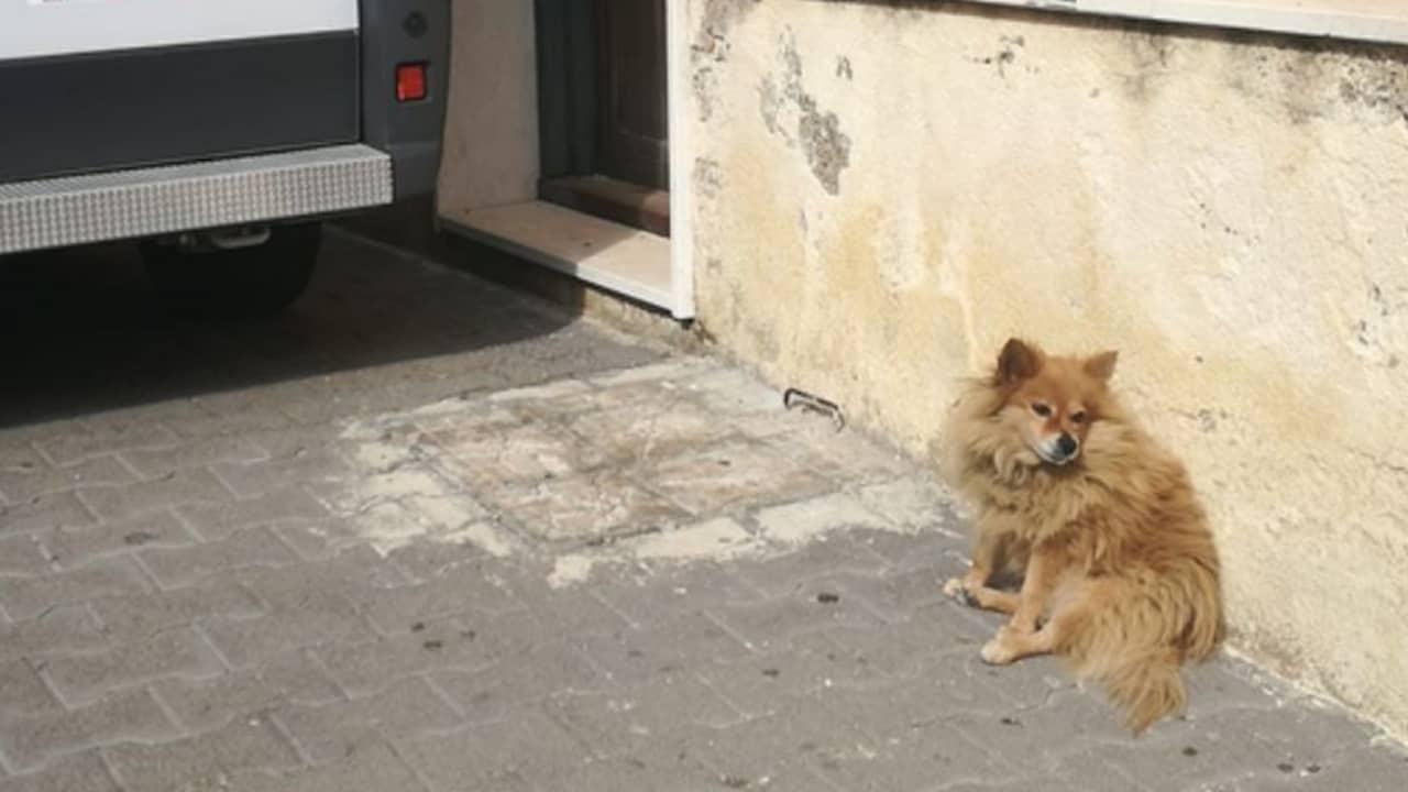 Il cane lo aspetta da 3 anni all'ospedale anche se lui è morto