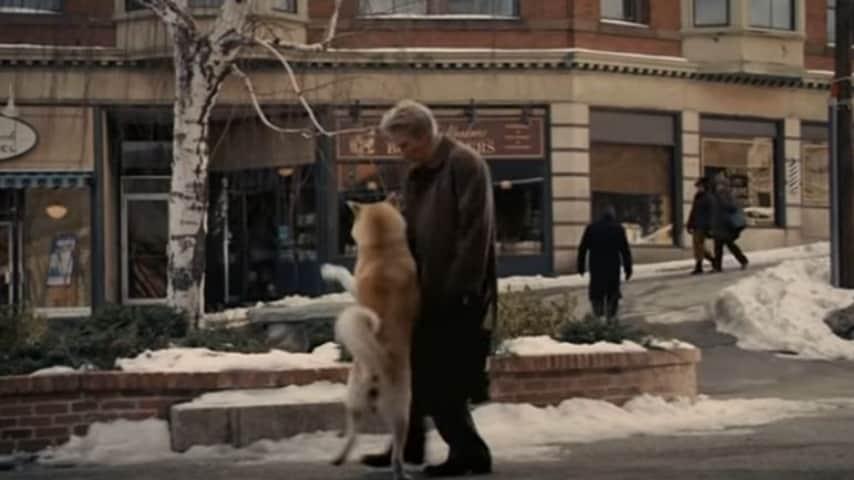 Un cane aspetta il suo padrone per 3 anni davanti l'ospedale