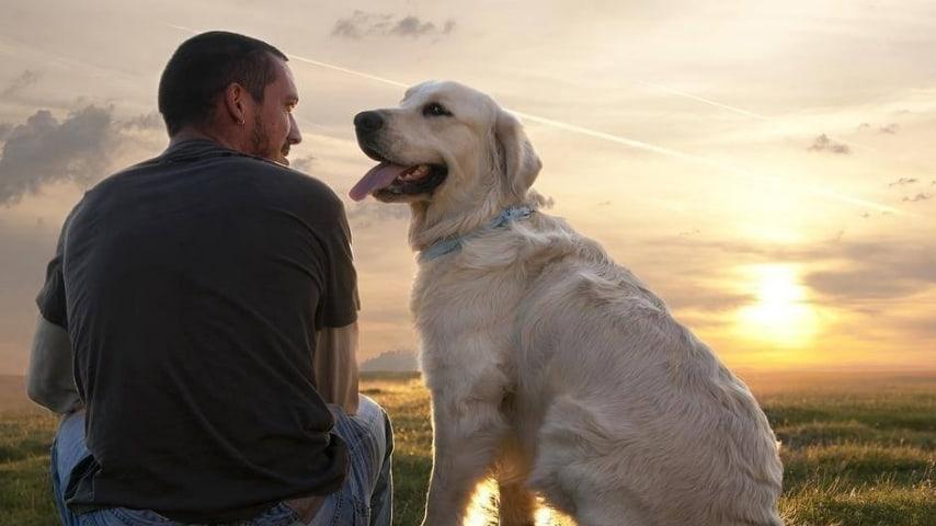 Il cane lo aspetta all'ospedale da 3 anni