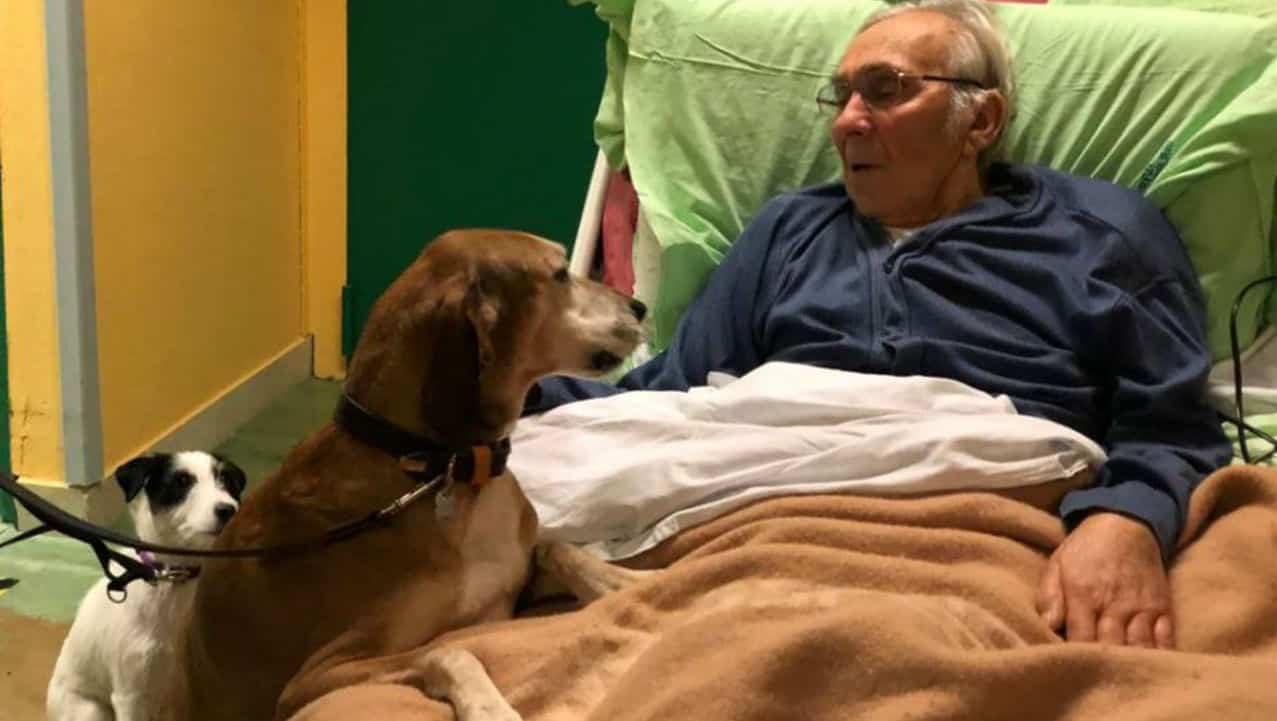 Anziano in fin di vita chiede di vedere per l'ultima volta i suoi cani in ospedale