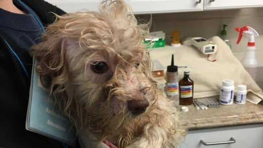 Una donna viveva con 200 cani in mezzo a escrementi e urina