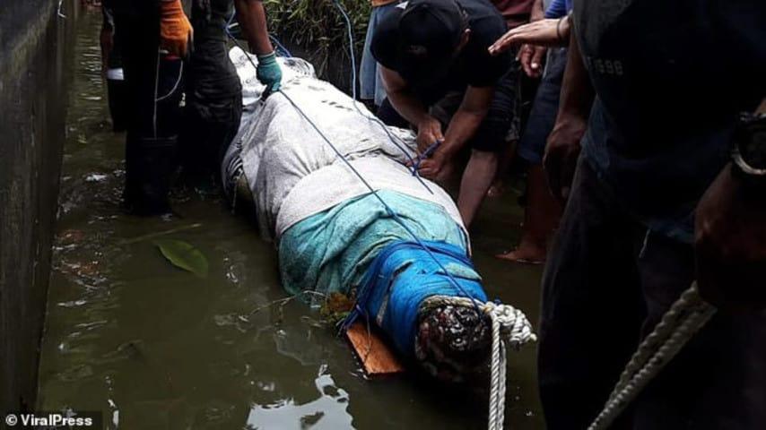 Indonesia, scienziata divorata da un coccodrillo mentre gli dava da mangiare
