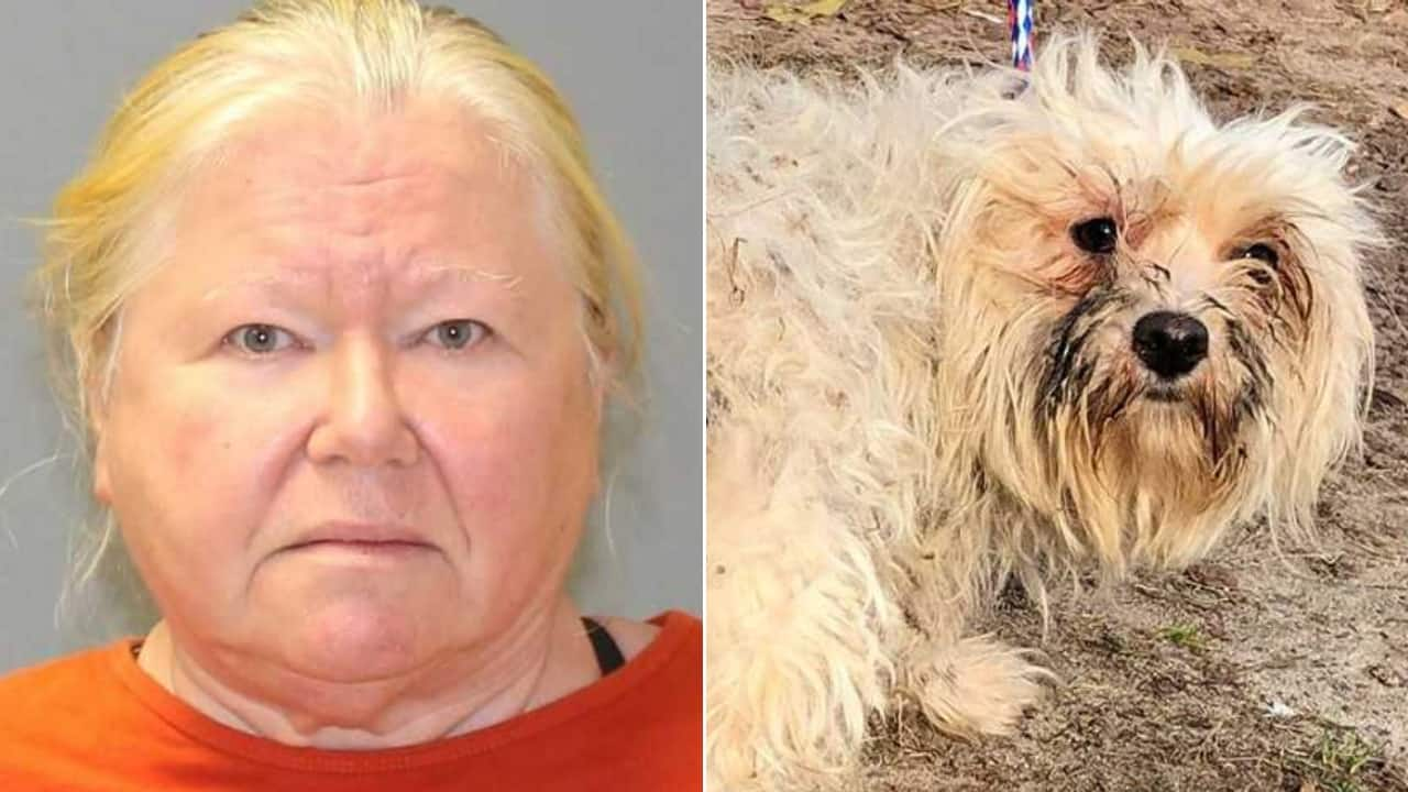 Donna vive con 160 cani: accusati di crudeltà sugli animali