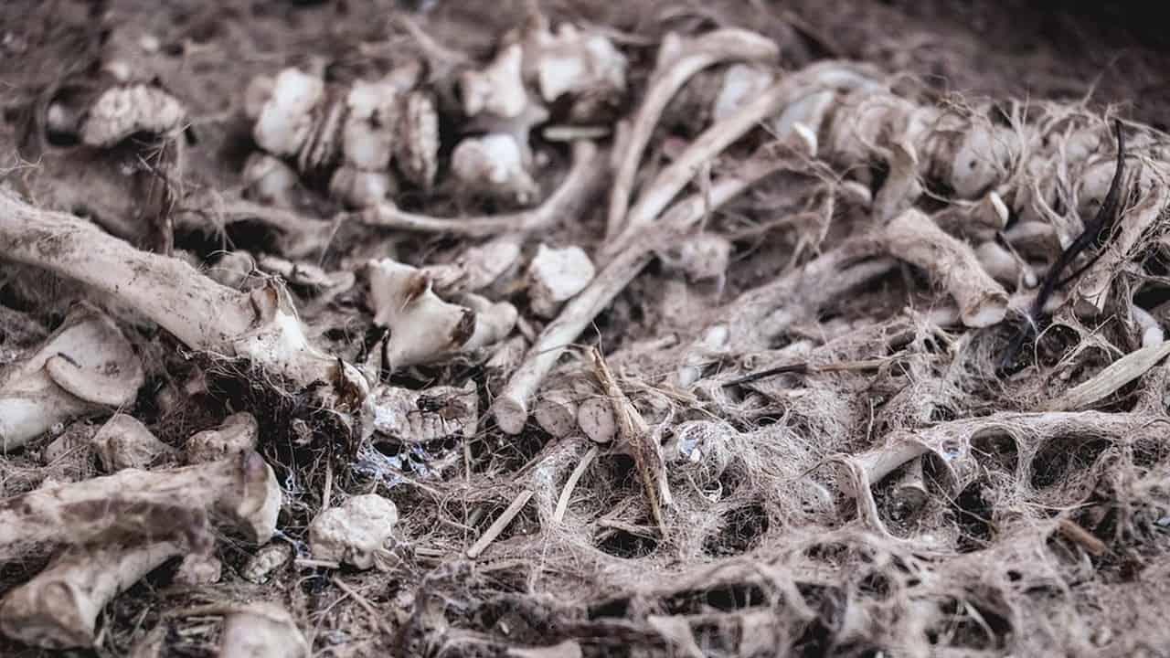 Trovati resti umani a Senago