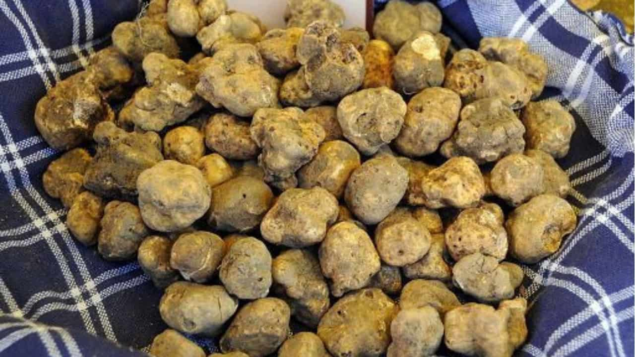 Governo dimezza iva sul tartufo e lascia al 22% quella sugli assorbenti