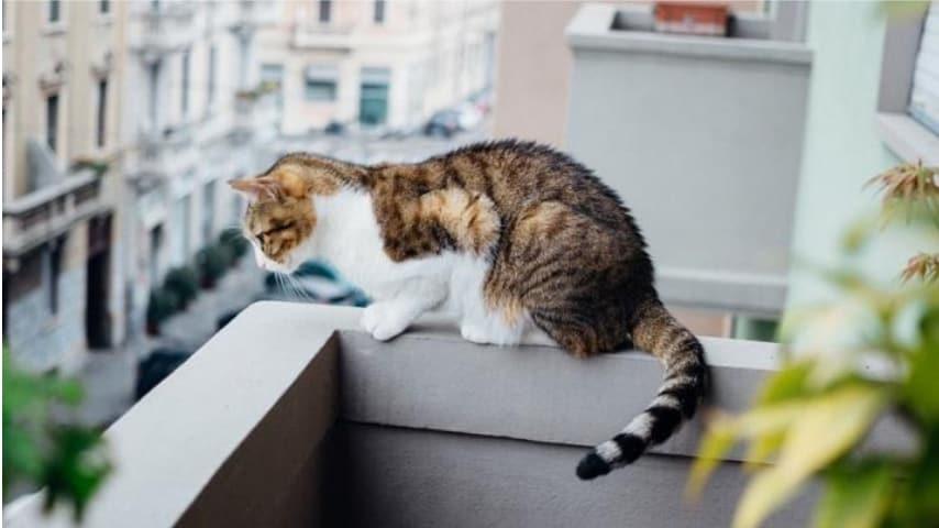 balcone_gatto