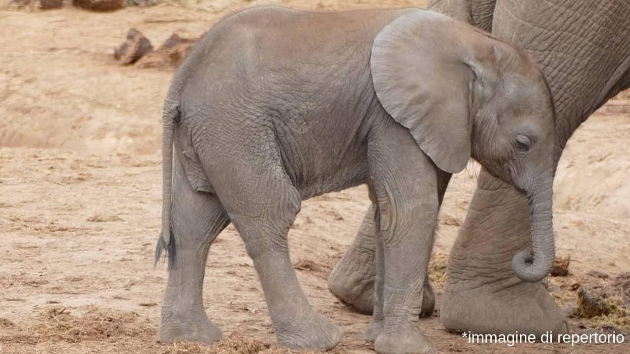 elefante zimbawe