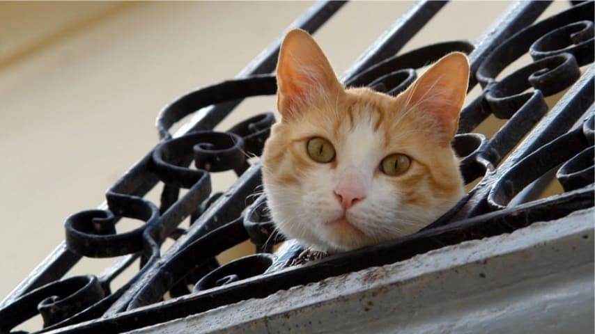 gatto_balcone