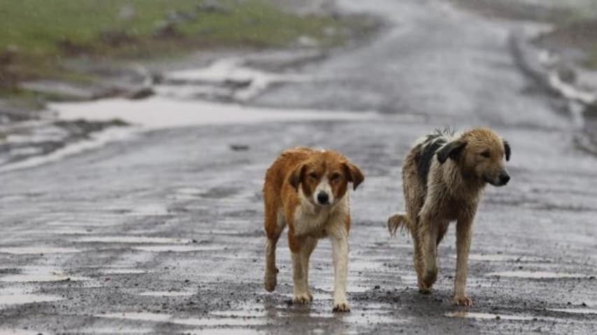 Foto di cani randagi