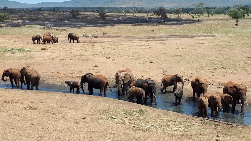 Una fila di elefanti che si abbeverano ad una pozza