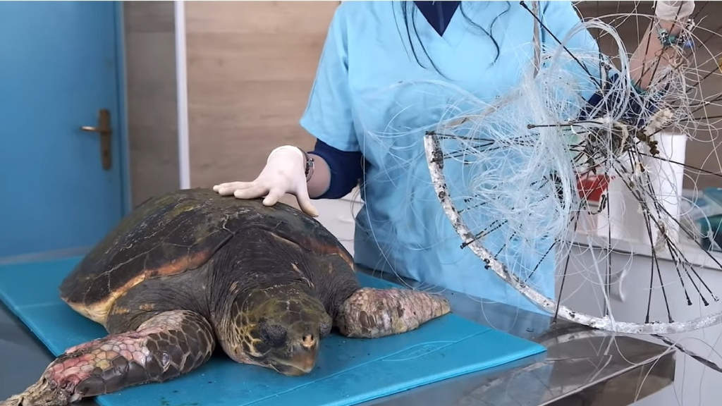 La tartaruga Afrodite e i rifiuti che la hanno ferita