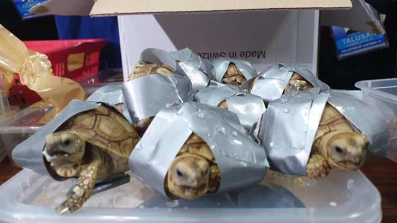 filippine tartarughe sequestrate