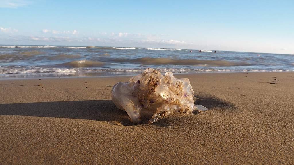 Meduse spiaggiate a Ischia