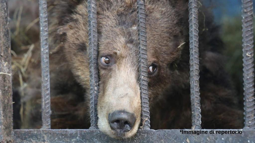 Animali sofferenti nelle gabbie di uno zoo (Immagine di repertorio)