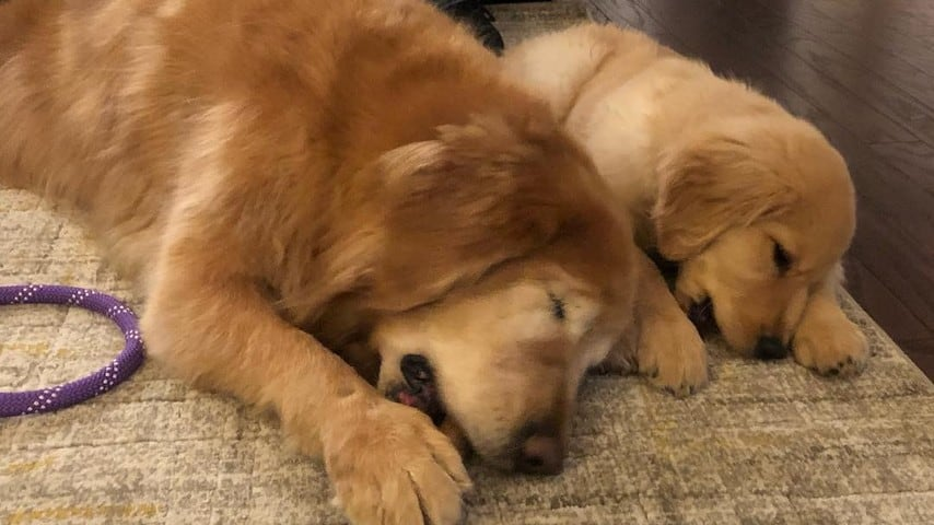 Il cane Charlie insieme al piccolo Maverick