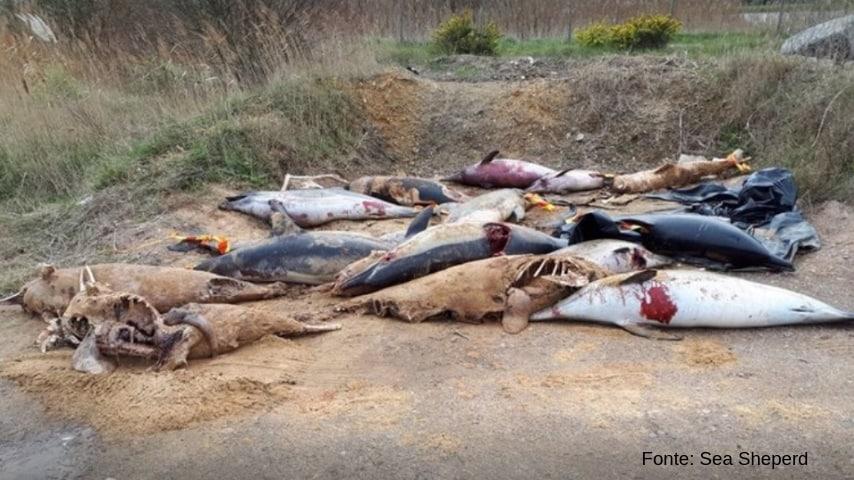 Delfini uccisi sulla spiaggia di La Rochelle