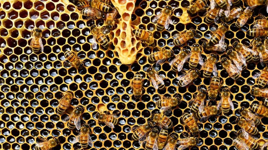 alveare con delle api