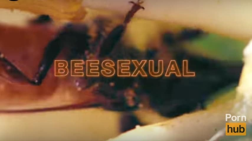Beesexual contiene video porno con api
