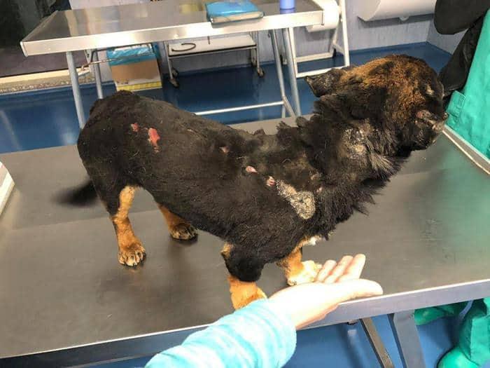 cane fuego torturato