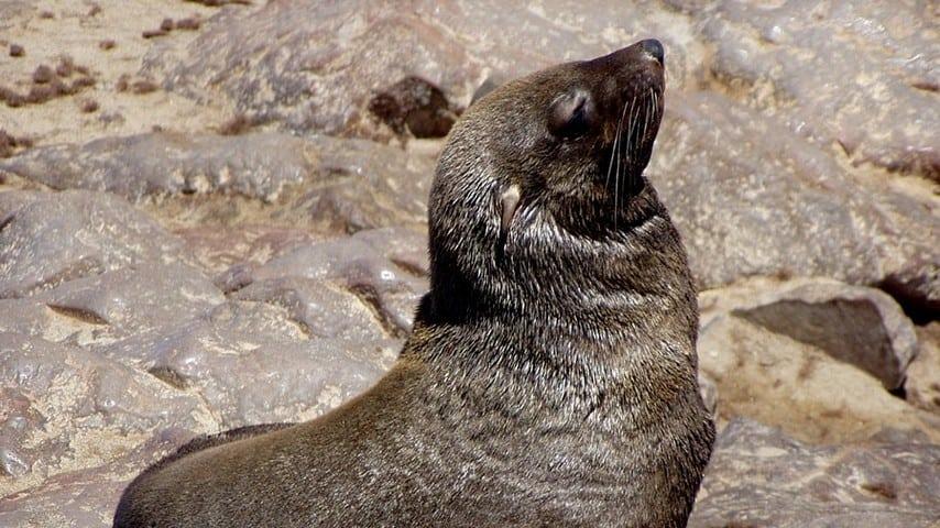 foca sulla spiaggia