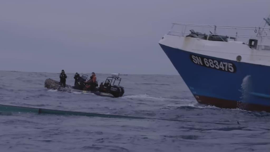 Attivisti di Sea Shepherd vedono i delfini uccisi