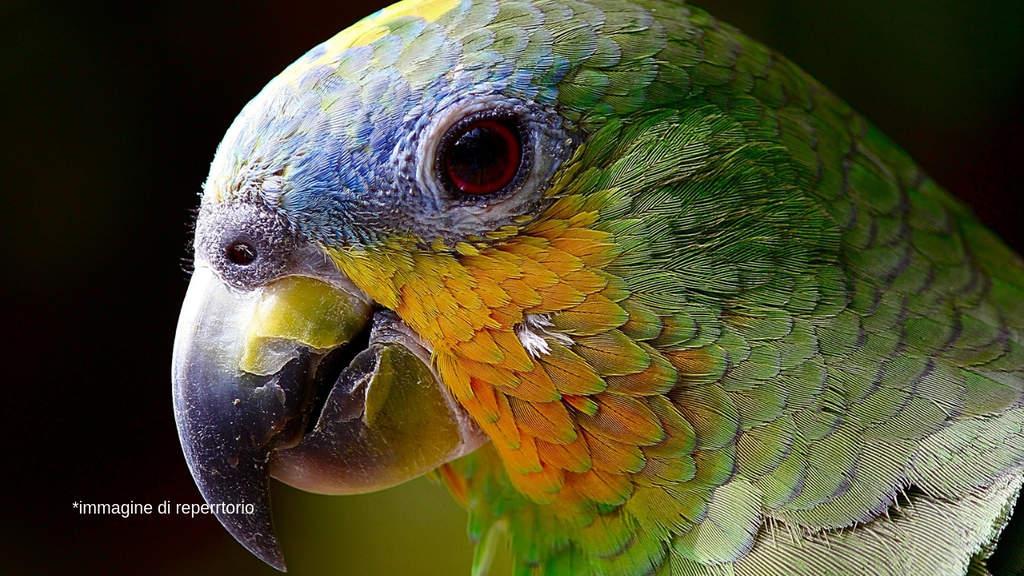 profilo di un pappagallo