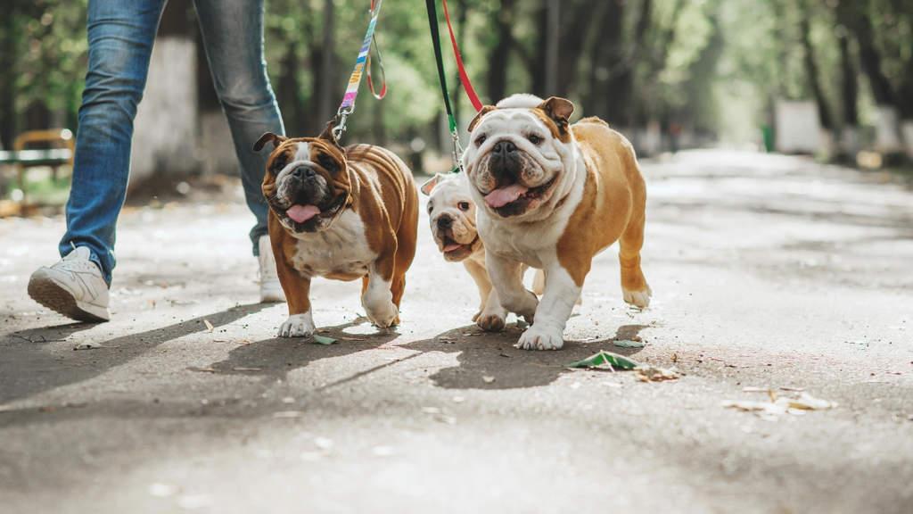 Come i cani possono aiutare i malati di tumore al polmone: il progetto Impera a Torino