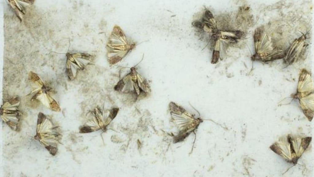 farfalline solite essere nelle dispense