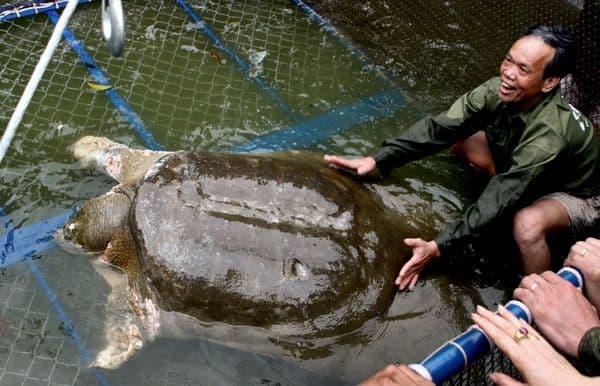 Tartaruga gigante morta in Cina. Fonte: National Geographic