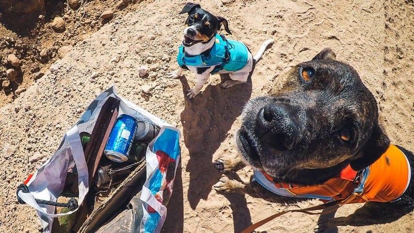 Il cane Chipper raccoglie la spazzatura